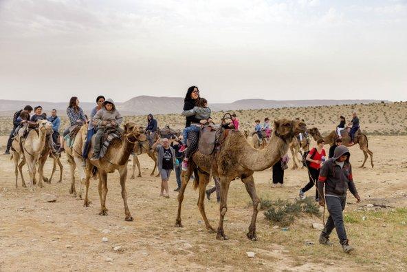 טיולי גמלים בחאן השיירות | צילום: באדיבות חאן השיירות