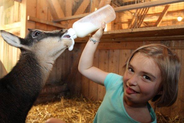 פארק החיות Wilde Berg Mautern אפשר להאכיל בעלי חיים | צילום: Katharina Wassler