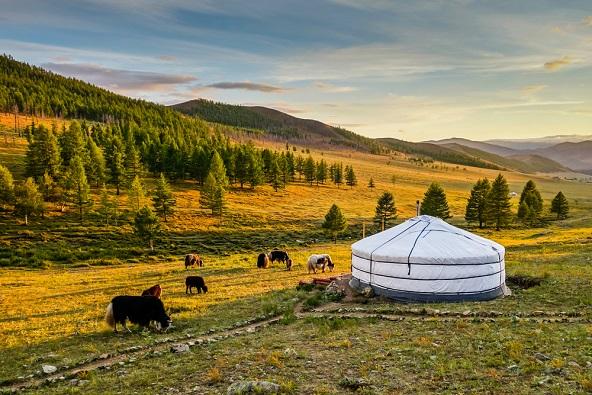 מסע שטח ייחודי אל מרחבי מונגוליה – 11 יום
