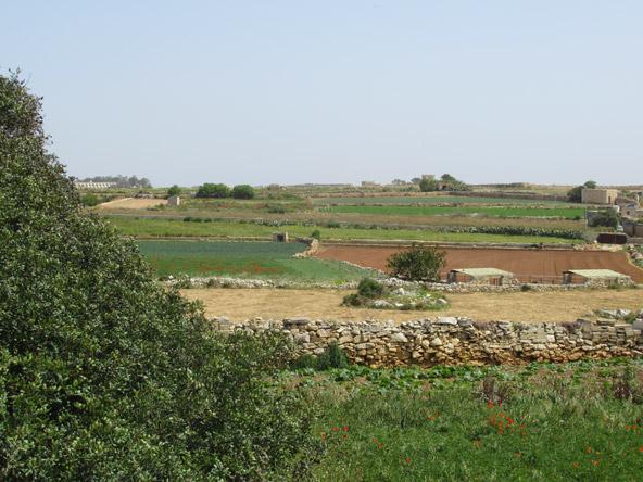 שדות מעובדים סמוך למקדשים העתיקים. החלקות מסומנות בגדרות אבנים מקומיות