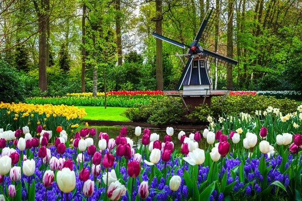 גני קוקנהוף בהולנד. בראשית מאי עדיין אפשר ליהנות מפריחה מרהיבה של צבעונים