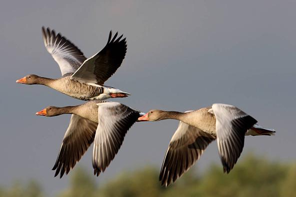 מה עושות הציפורים במערב פולין?