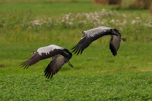 בשמורת הטבע שבמערב פולין אפשר לראות ציפורים ועופות ממינים רבים | צילומים באדיבות לשכת התיירות של פולין