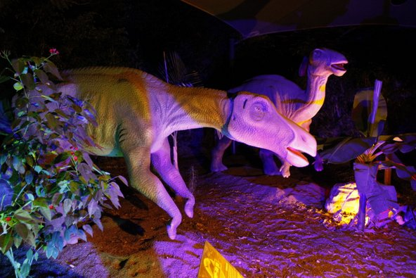 מבוך הדינוזאורים המואר בלילה בגן גורו | צילום: נדב כפיר