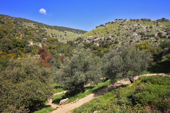 בשמור הרי מירון אפשר ליהנות ממסלולי הליכה נהדרים גם בקיץ