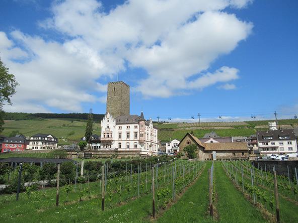 כרמים, מצודה ואחוזת יין בעיירה רוסנהיים