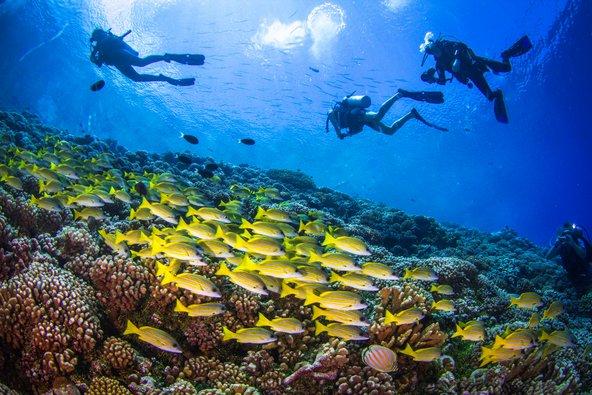 צלילה בשונית האלמוגים בפקארווה