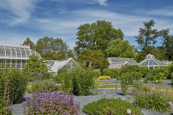 חממות בגן הבוטני Kaisaniemi | צילום: Jiri Vondrous / Shutterstock.com