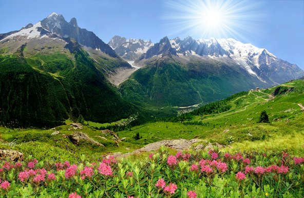 שאמוני: נוף טיפוסי בקיץ