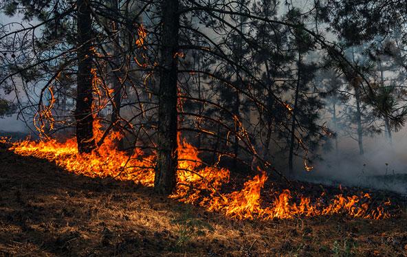 שינויי האקלים מורגשים באופן ממשי, עם חורפים קצרים ויבשים יותר, בהם נגרמות שריפות יער קיצוניות