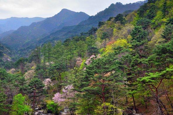 נוף בהרי מיויאנג בצפון קוריאה