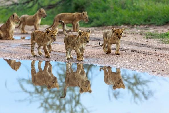 טנזניה טריפ – Tanzania Trip