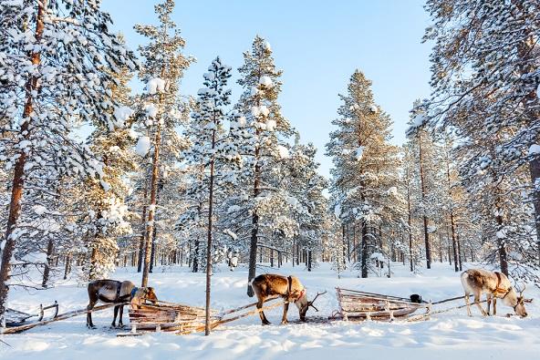ספארי שלג בלפלנד – ארץ זוהר הצפון
