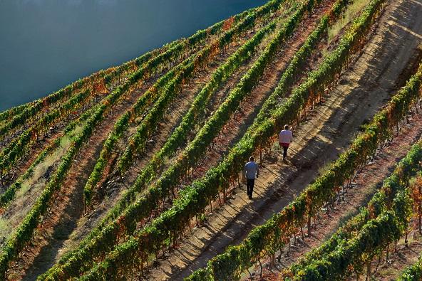 טיול יין וקולינריה בפורטוגל התוססת – 6 ימים