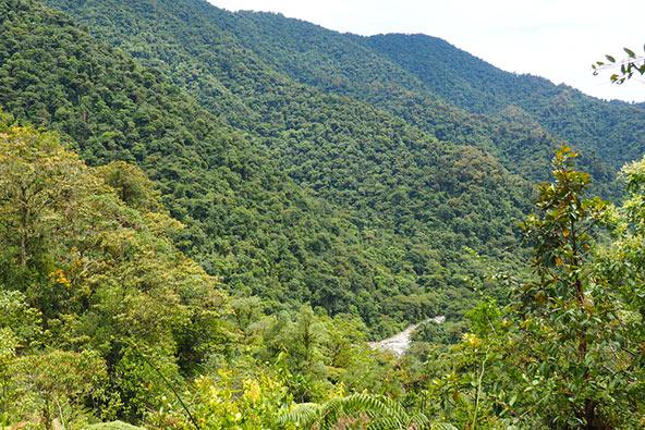 """באזור טפאנטי יורדים 8,000 מ""""מ גשם בשנה, דבר האחראי לצמחייה ירוקה ועשירה במיוחד"""