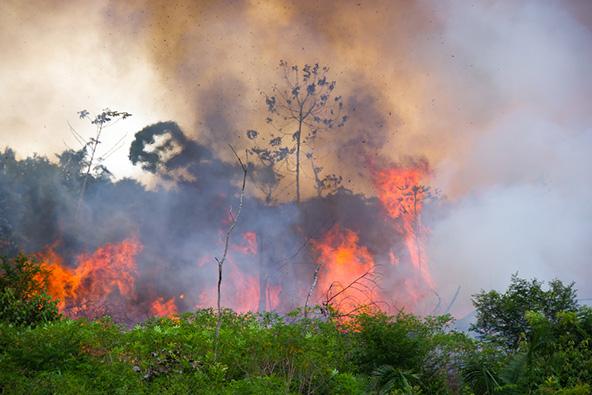 גם באמזונס מתרחשת תופעת המדבור, כתוצאה מכריתה לא מבוקרת של עצים ושריפת צמחייה לצורך פינוי אדמות לצרכים חקלאיים