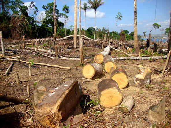 תופעת המדבור מתרחשת גם באמזונס, תוצאה מכריתת עצים ושריפת צמחייה כדי לפנות אדמות לצרכים חקלאיים