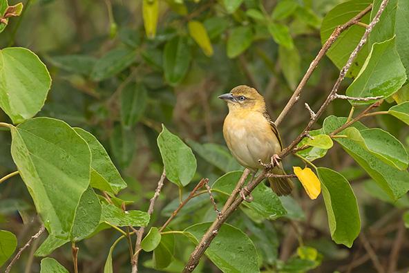 במהלך טיול באוגנדה פוגשים בעלי חיים רבים, קטנים וגדולים, מעופפים וזוחלים, טורפים ונטרפים