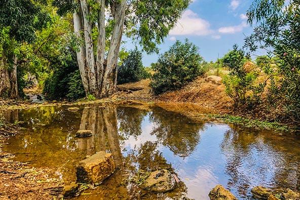 עין געתון, פינת חמד מקסימה מוקפת עצים | הצילום באדיבות מלונות מטיילים
