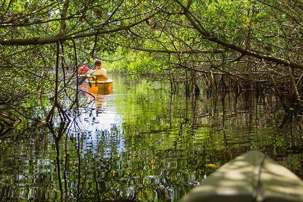 שייט בשמורת אברגליידס בפלורידה