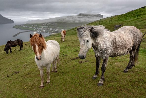 סוסים רועים באחו | צילום: רפי קורן
