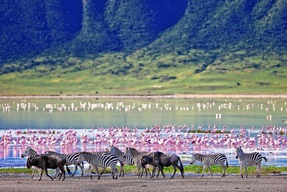 זברות, גנו ופלמינגו במכתש נגורנגורו