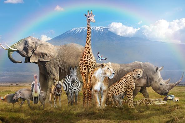 החידון הגיאוגרפי: יונקים גדולים