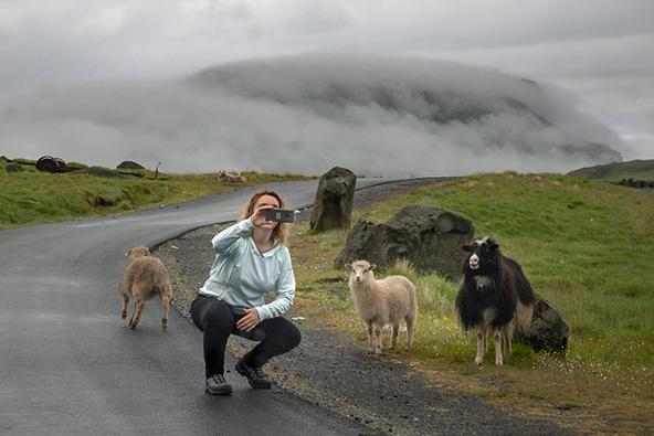 סלפי עם כבשים | צילום: רפי קורן