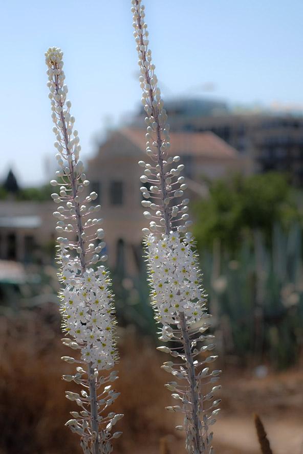 חצבים בירושלים