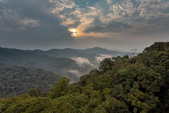 יער הגשם Nyungwe