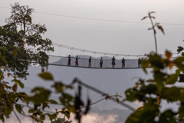 מבט מגובה הצמרות: הגשרים התלויים הגבוהים באפריקה בפארק Nyungwe