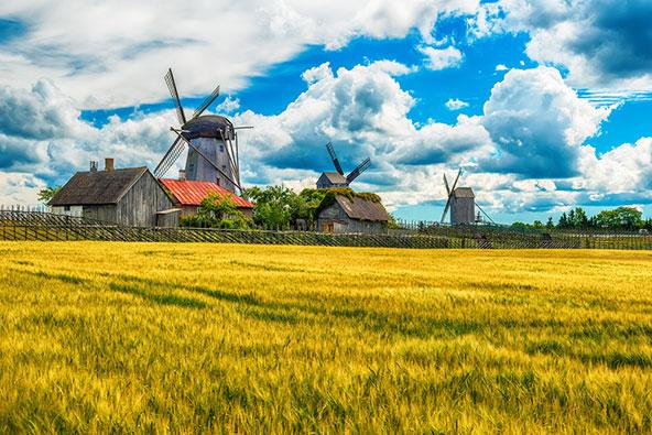 הולנד? ממש לא! טחנות רוח, שדות ובתים כפריים באי סאראמה, הגדול באיים של אסטוניה