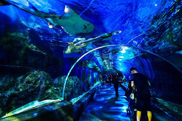 להביט על הדגים והכרישים מלמטה - האקווריום הענקי בסיאם פרגון