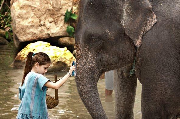 בחווה לשיקום פילים המבקרים מטפלים בפילים ומכירים אותם מקרוב