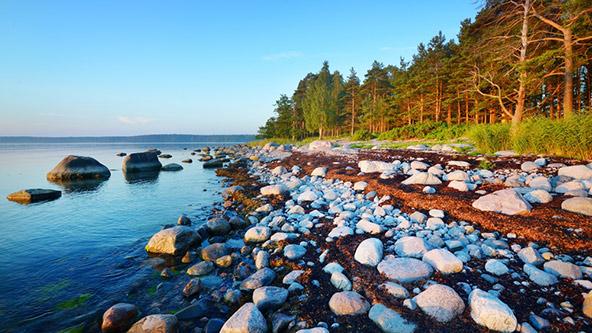 חוף סלעי בצפון אסטוניה