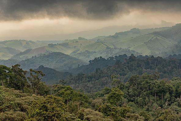 רואנדה – מסע לארץ אלף הגבעות