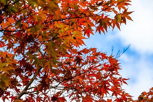 חוויות בקיוטו והסביבה