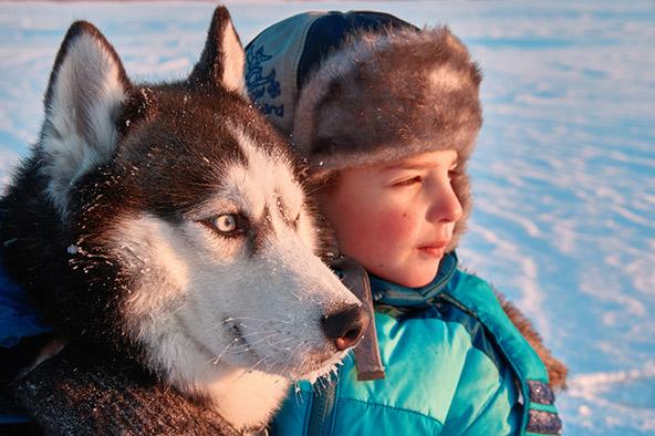 חברות חדשה עם כלב האסקי מקומי
