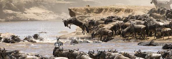 נדידת הפרסתניים בעקבות הגשמים והמרעה היא אחת מתופעות הטבע המדהימות בעולם