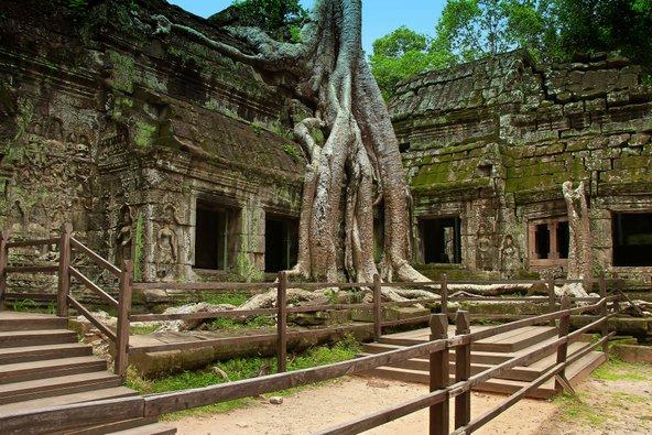 מקדש טה פרום אשר עצי הגו'נגל שלחו את שורשיהם בין קירותיו