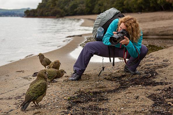 מפגש קרוב במיוחד עם ציפורי קיאה