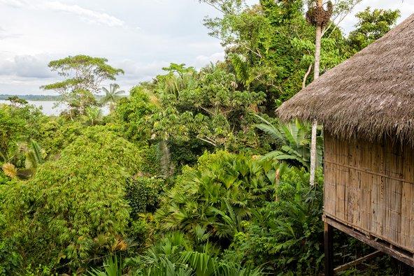 לודג' אקולוגי ביער הגשם של האמזונס. תמיד העדיפו מקומות לינה עם מודעות אקולוגית