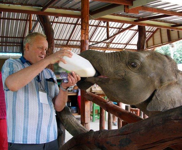 בחוות לשיקום פילים המבקרים הופכים למטפלים הצמודים של הפיל ליום אחד