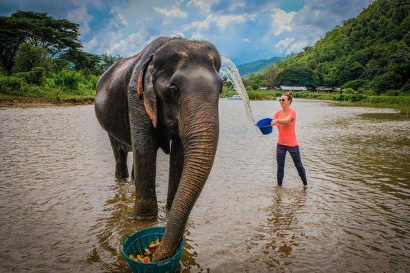 במקום לצפות במופעים של פילים, התנדבו ליום אחד בחווה לשיקום פילים וטפלו בהם