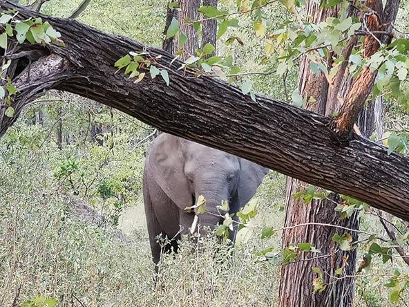 השמורות הריקות של מוזמביק ומלאווי מתמלאות בבעלי חיים שהובאו מדרום אפריקה | צילום: רונן רז