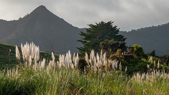 עשרות גוונים של ירוק. בקדמת הצילום - הצמח האופייני לניו זילנד, טויטוי