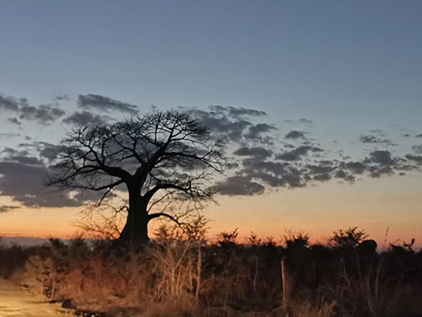 השנים הרעות תמו, השנים הטובות בפתח. נוף אפריקאי | צילום: רונן רז