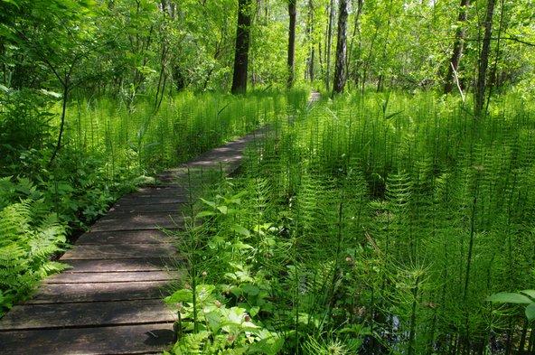 בפארק הלאומי פולסקי יש מסלולי הליכה בין יערות וביצות