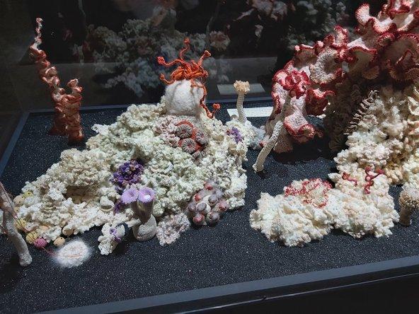מושבות האלמוגים של כריסטין ומרגרט ורטהיים
