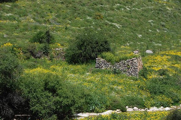 טחנות קמח עתיקות בישראל